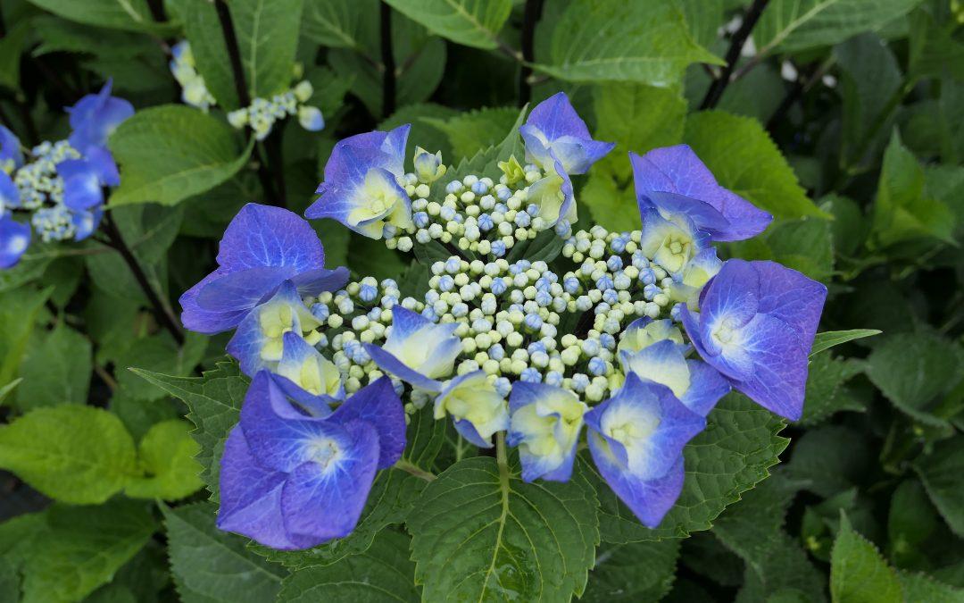 Nuove fioriture